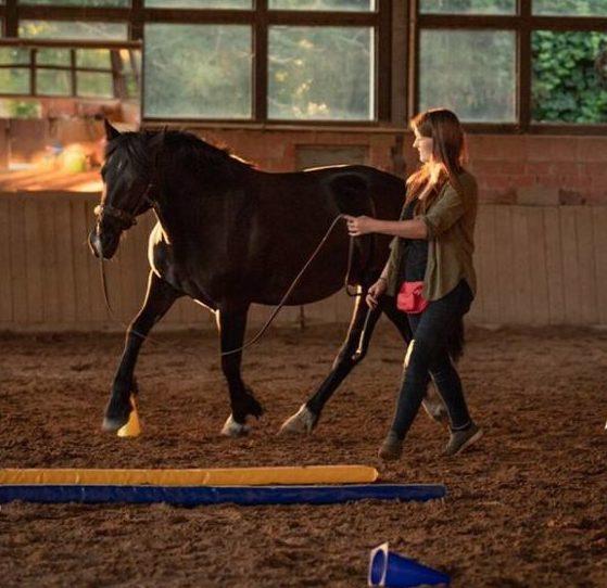 Gastbeitrag: Rückenschmerzen beim Pferd erkennen und vorbeugen