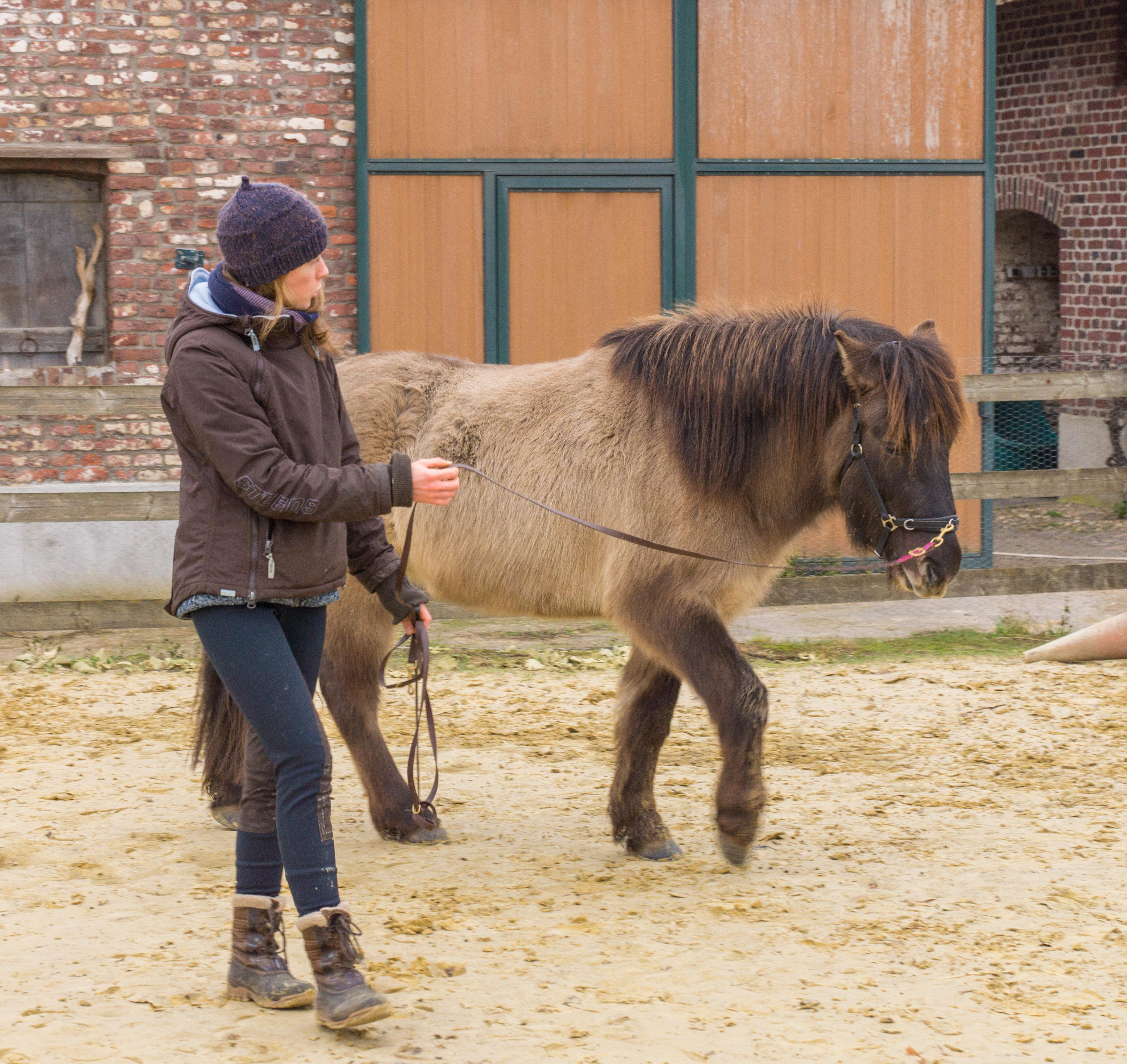 Die Rückenmuskulatur des Pferdes: Ein starker Rücken kennt keinen Schmerz – oder doch?