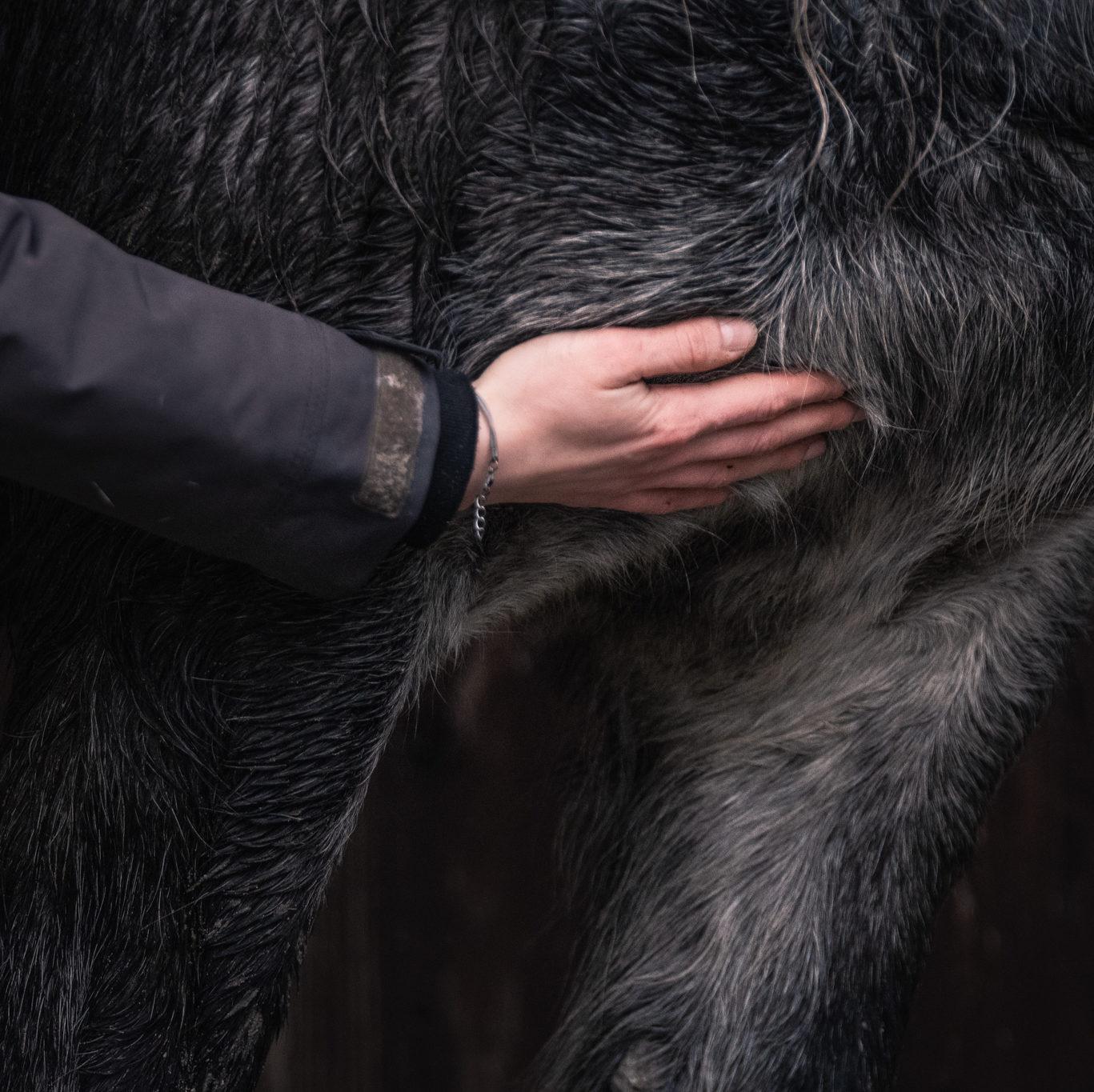 Die Bedürfnisse des Pferdes achten [1/3] – in der Therapie